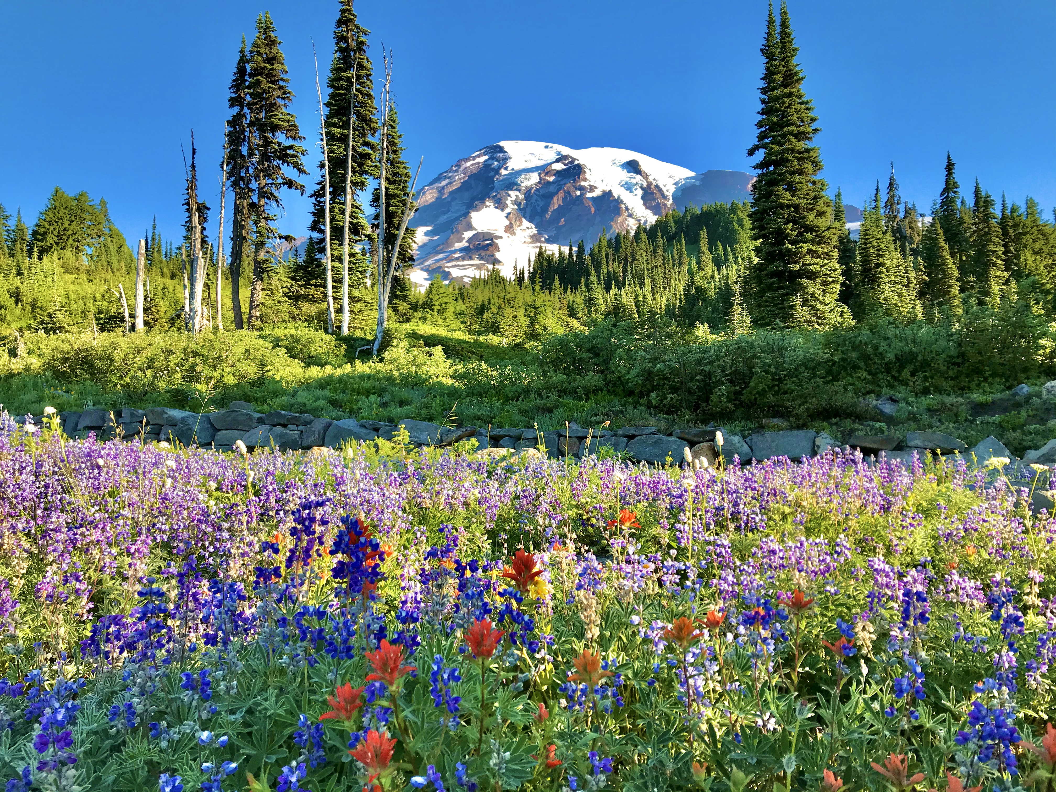 west-coast-flower-hikes — Colorful wildflowers blossom as a mountain rises in the distance.