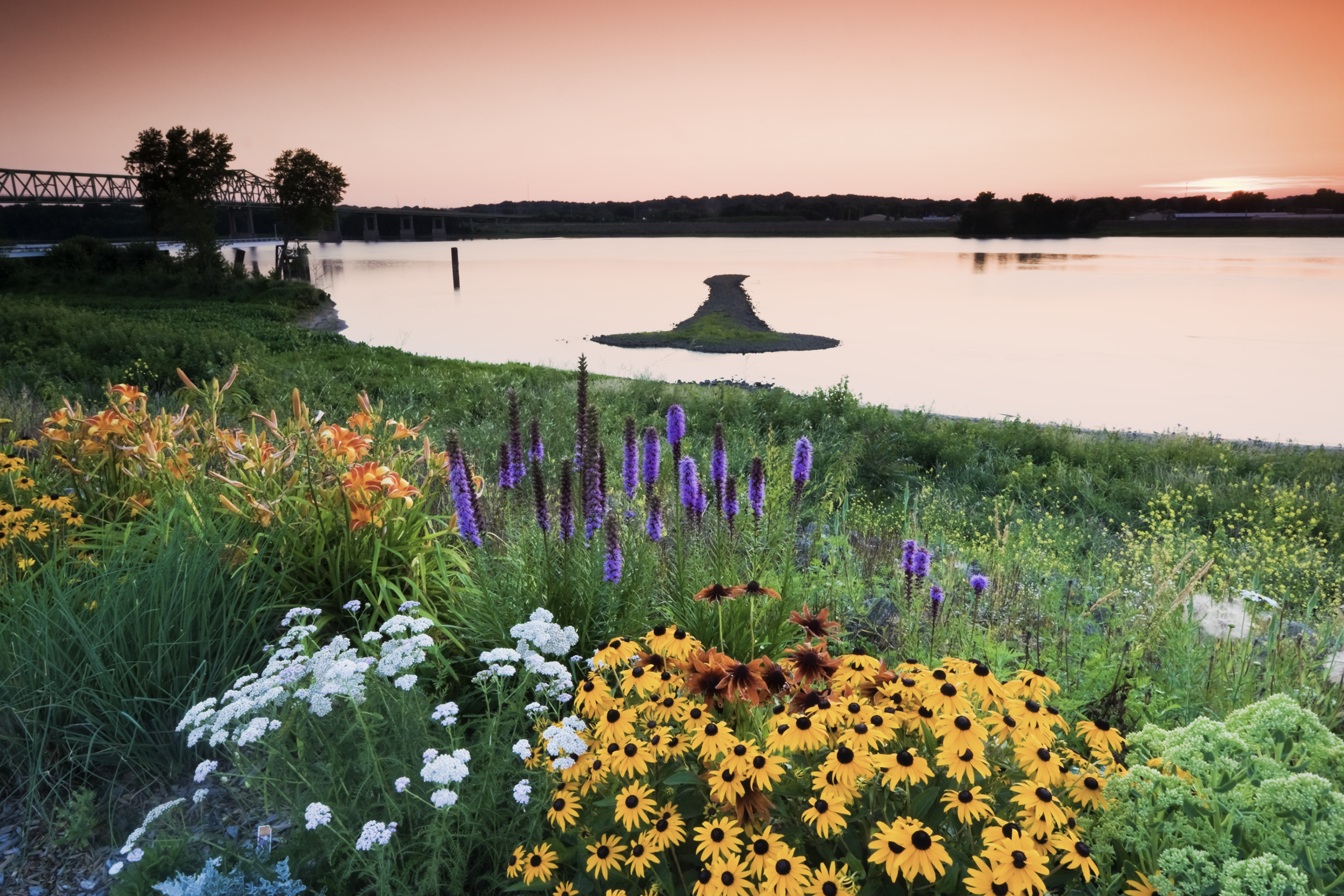 A river bank carpeted with grasses and colorful wildflowers.