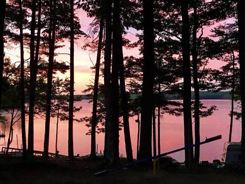 Pine trees silhouetted against sunset over a lake.
