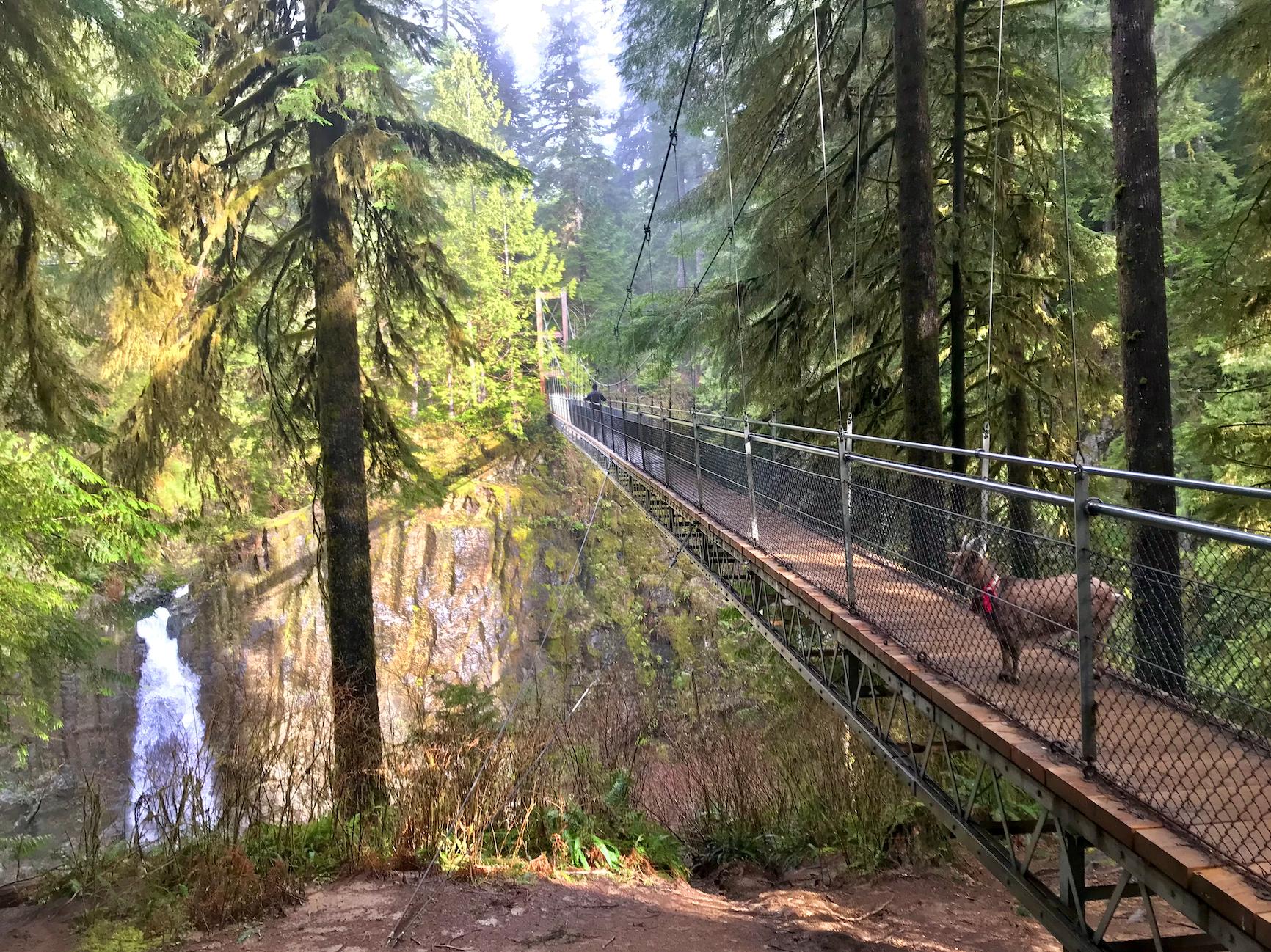 A lone figure crosses a suspension footbridge.