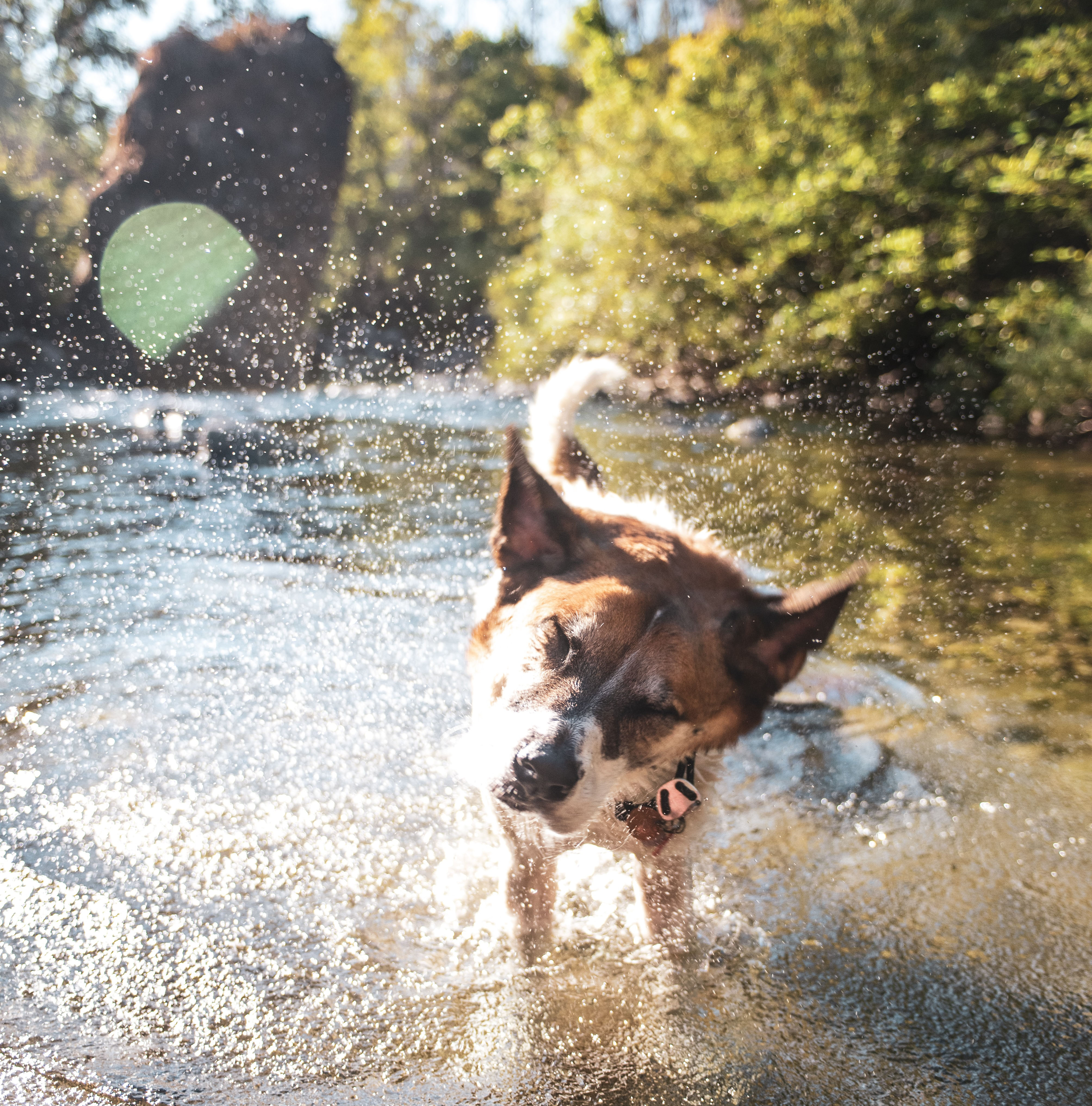 Keep RVIng Pets Cool -- Dog shaking off water