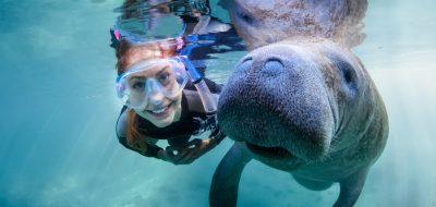 Crystal River and Florida's CItrus County — Woman diving with manatee and aqua waters.
