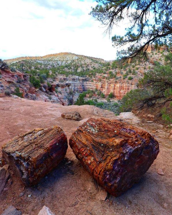 Petrified logs lying on the ground.