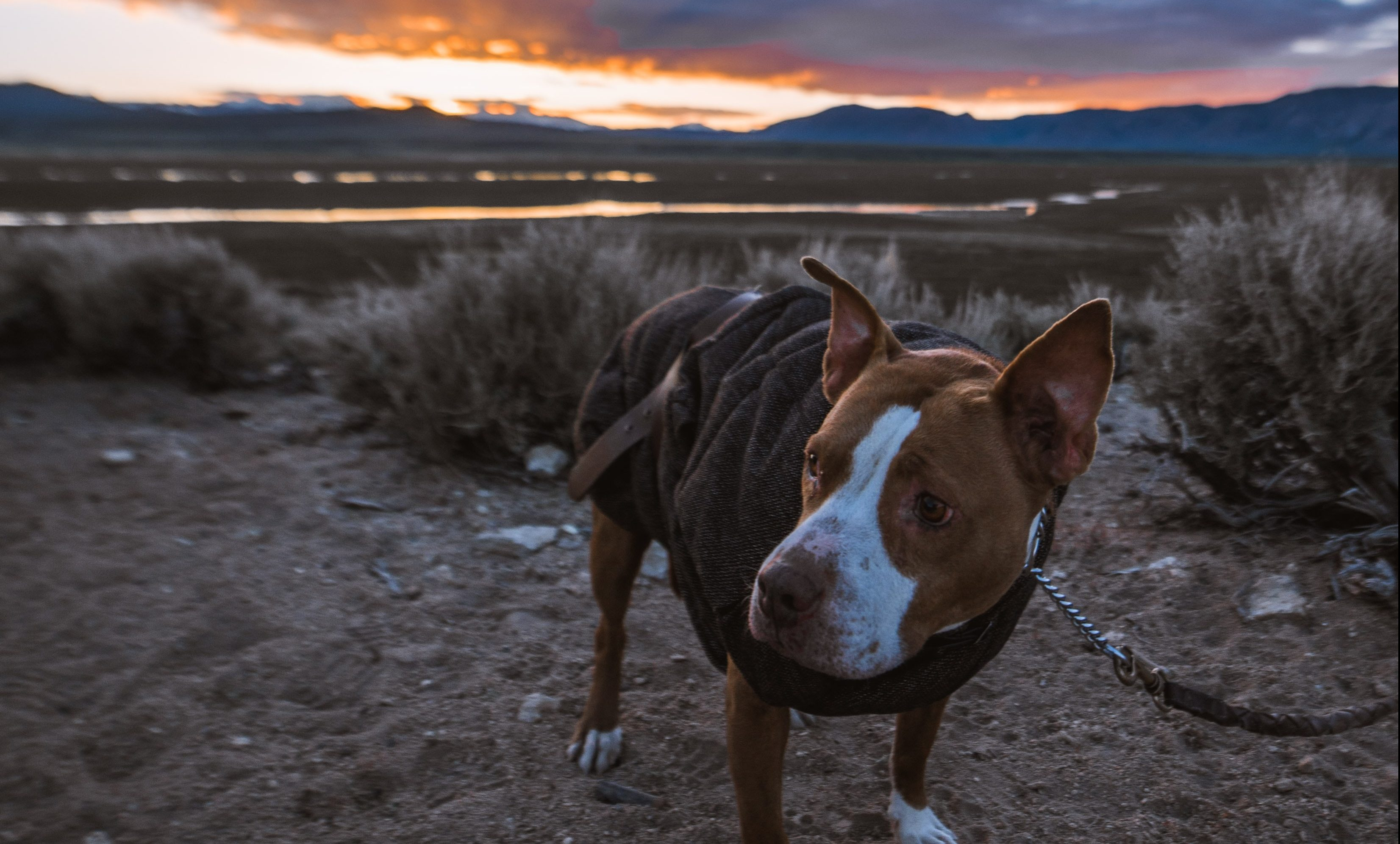 Dog standing on the dirt with sunset in background.