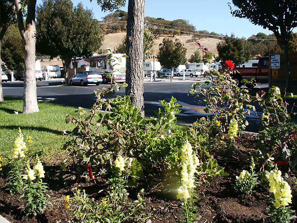 Garden of snap dragons with RVs parked in the background.