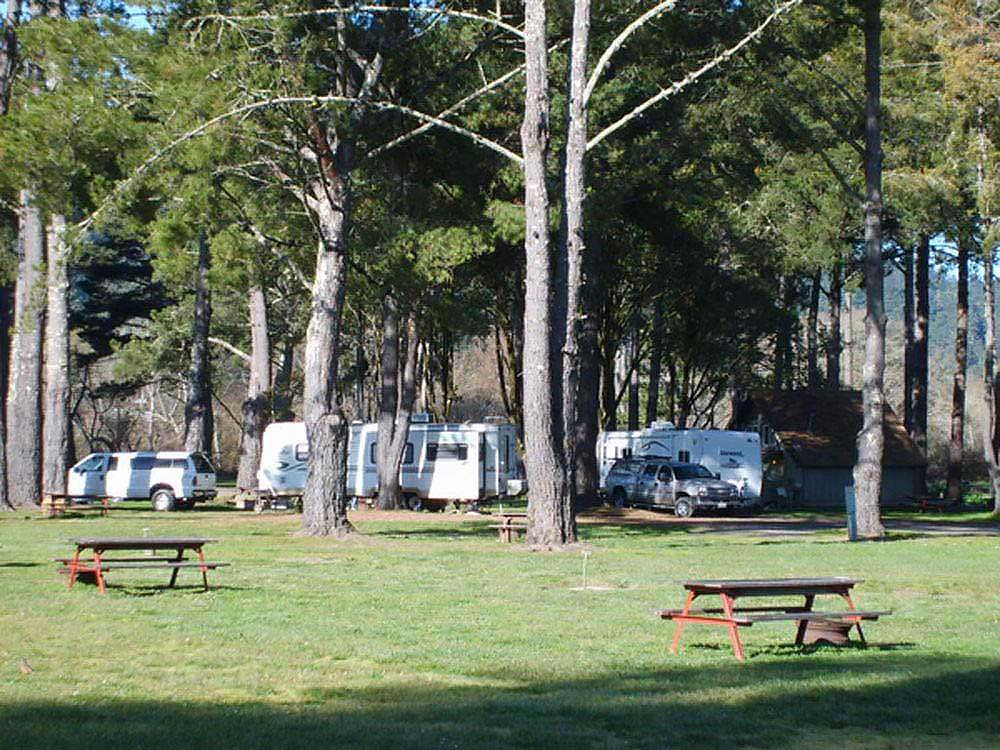Motorhomes and trailers parked under tall trees.