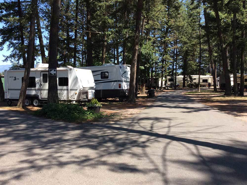 Travel trailers parked in the shade of towering fir trees.