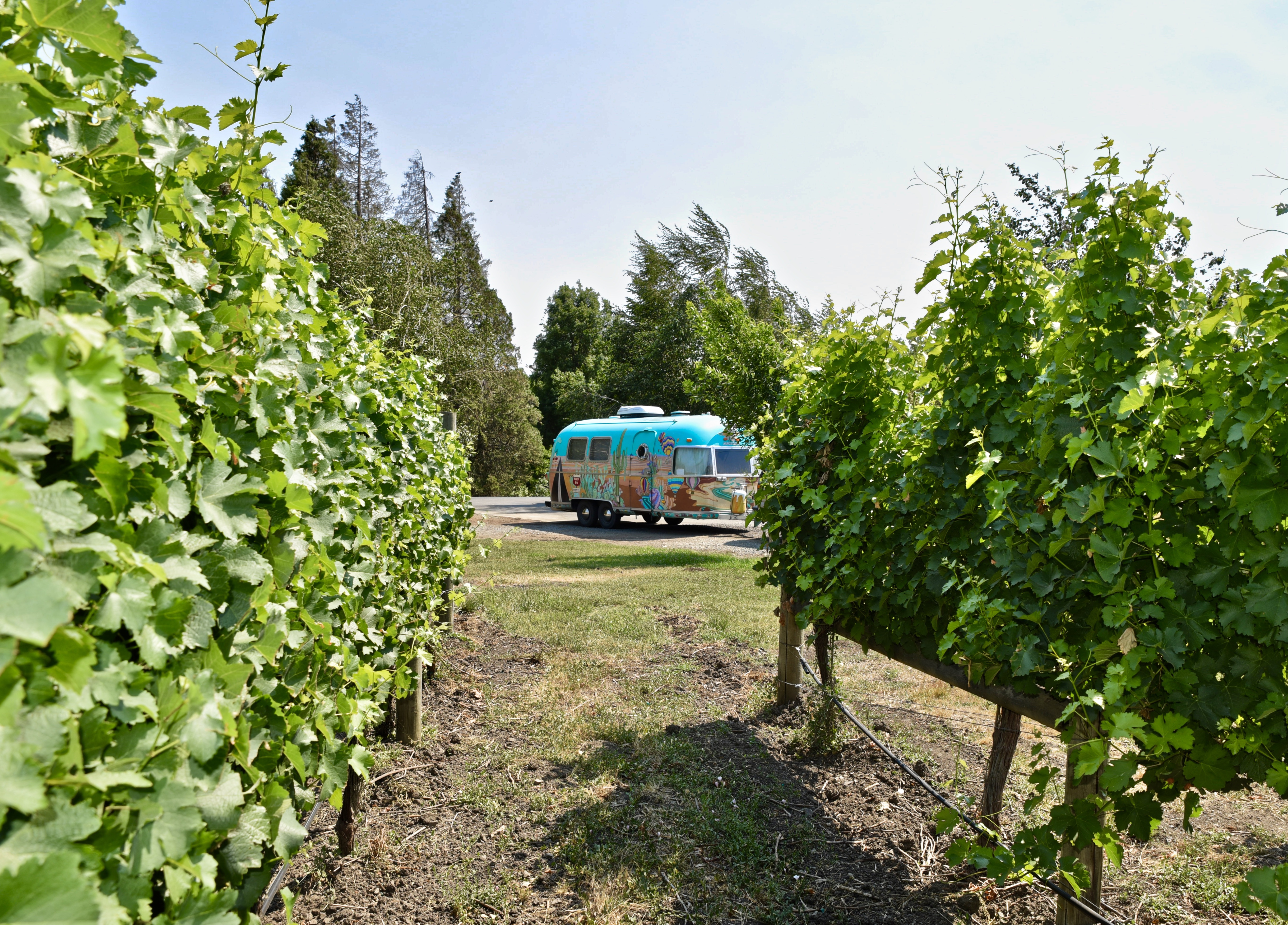 View of painted airstream through a row of vines.