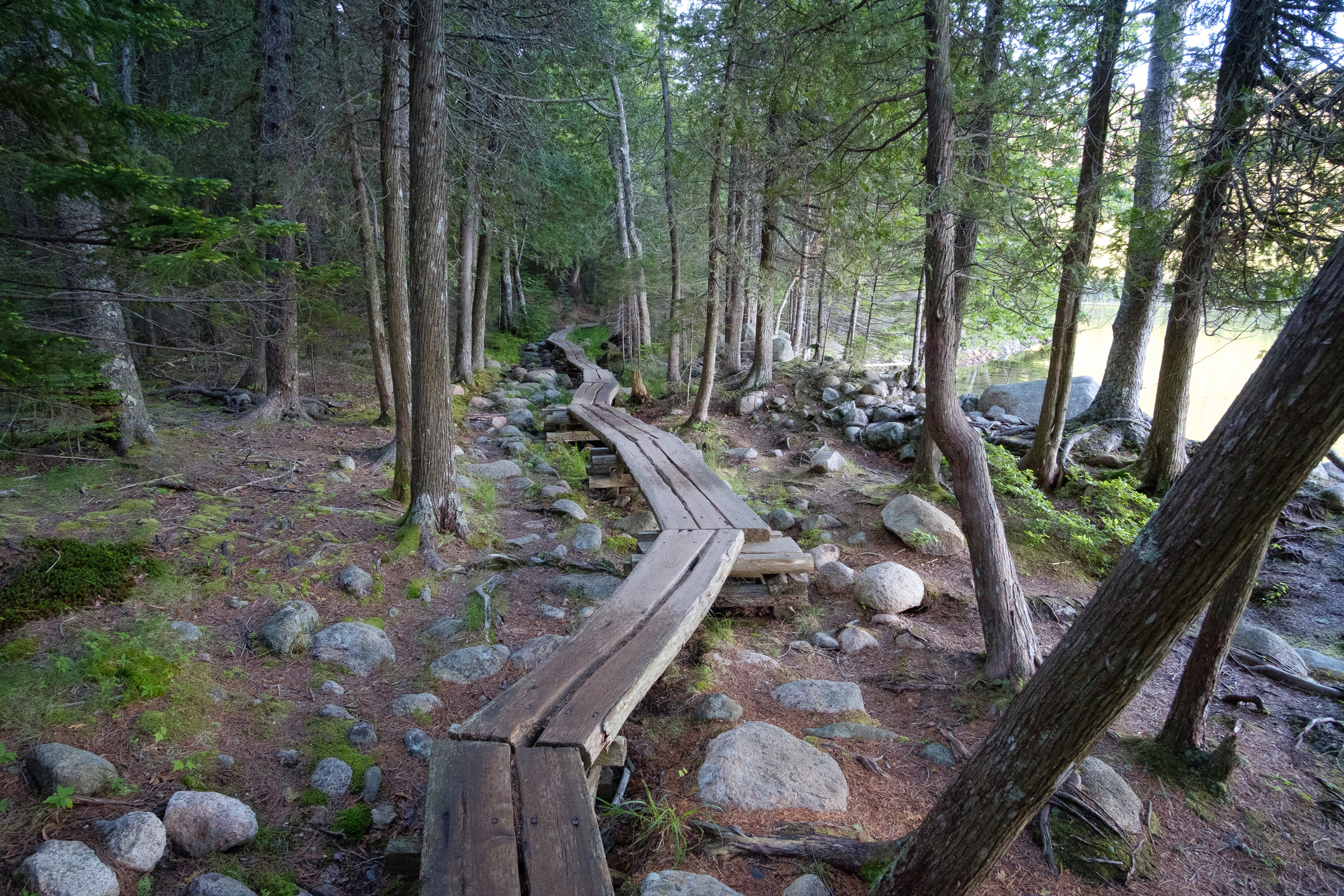 Raise wooden trail snakes through forest.