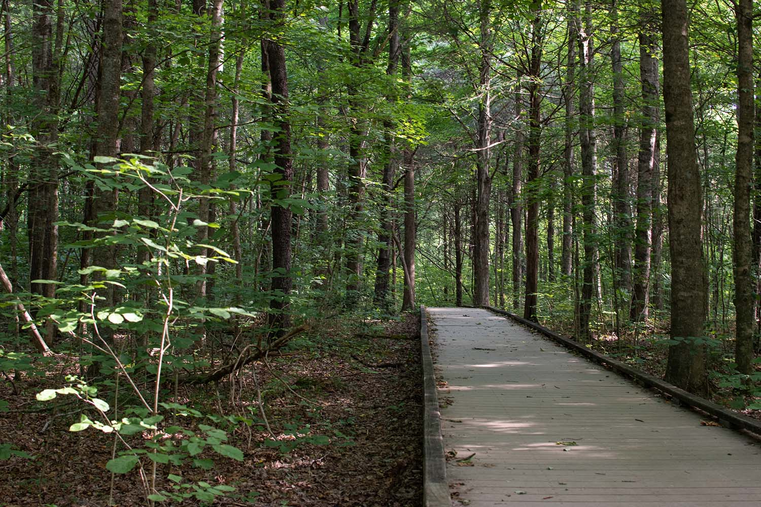 Raised trail in Mammoth Cave in Kentucky