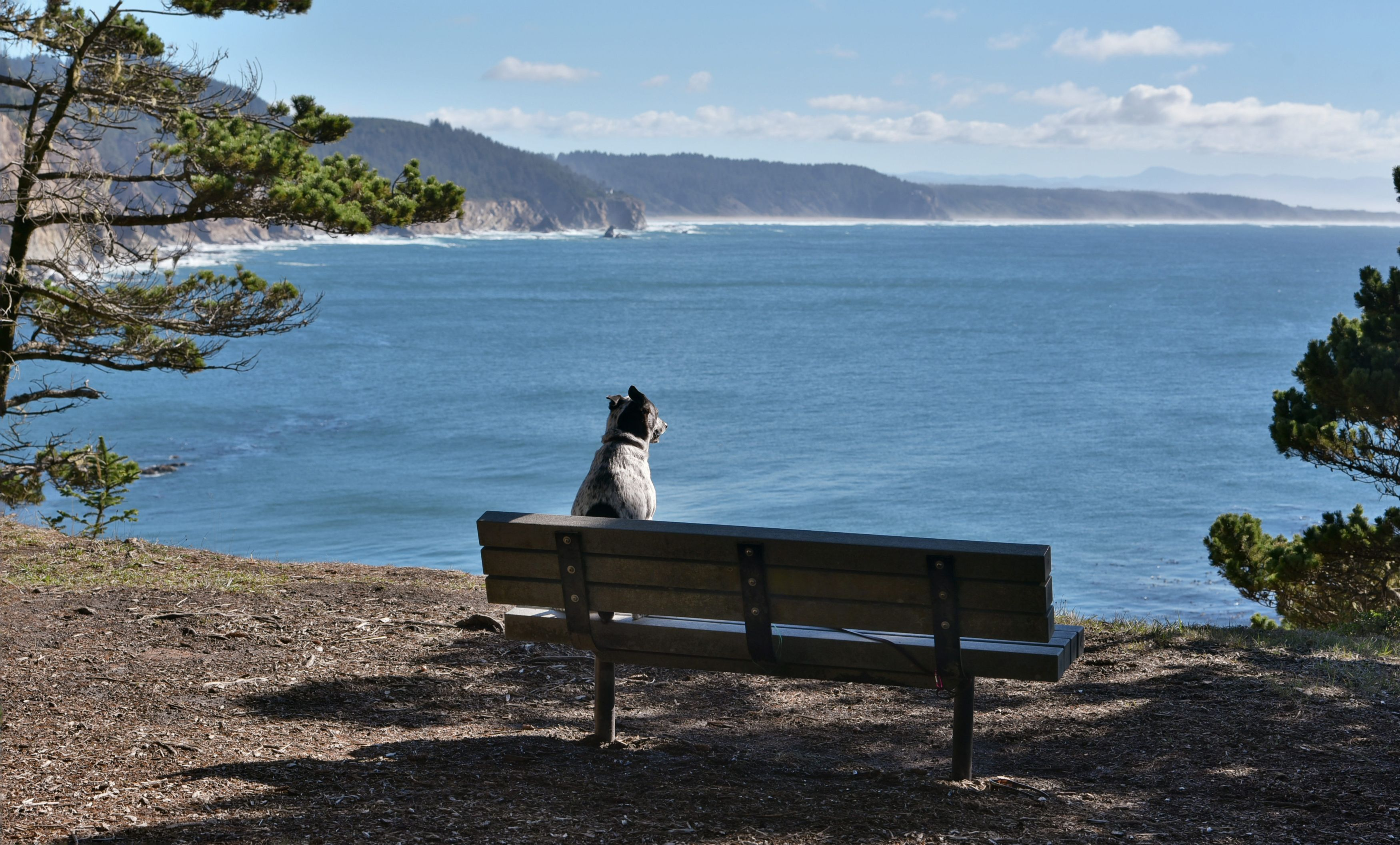 Dog on park bench looking at ocean.