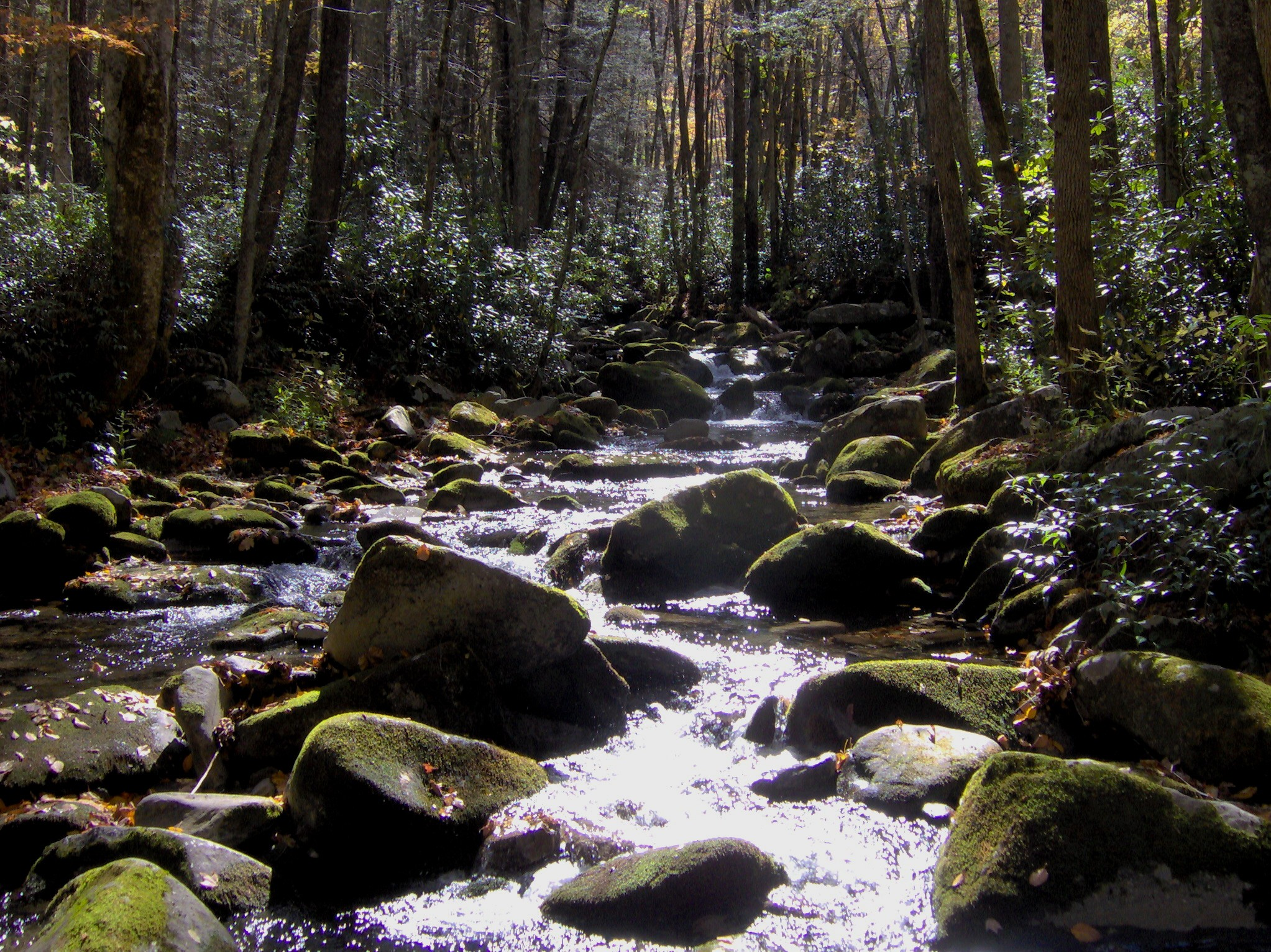 Sunlight sparks on the surface of a stream that races between boulders.