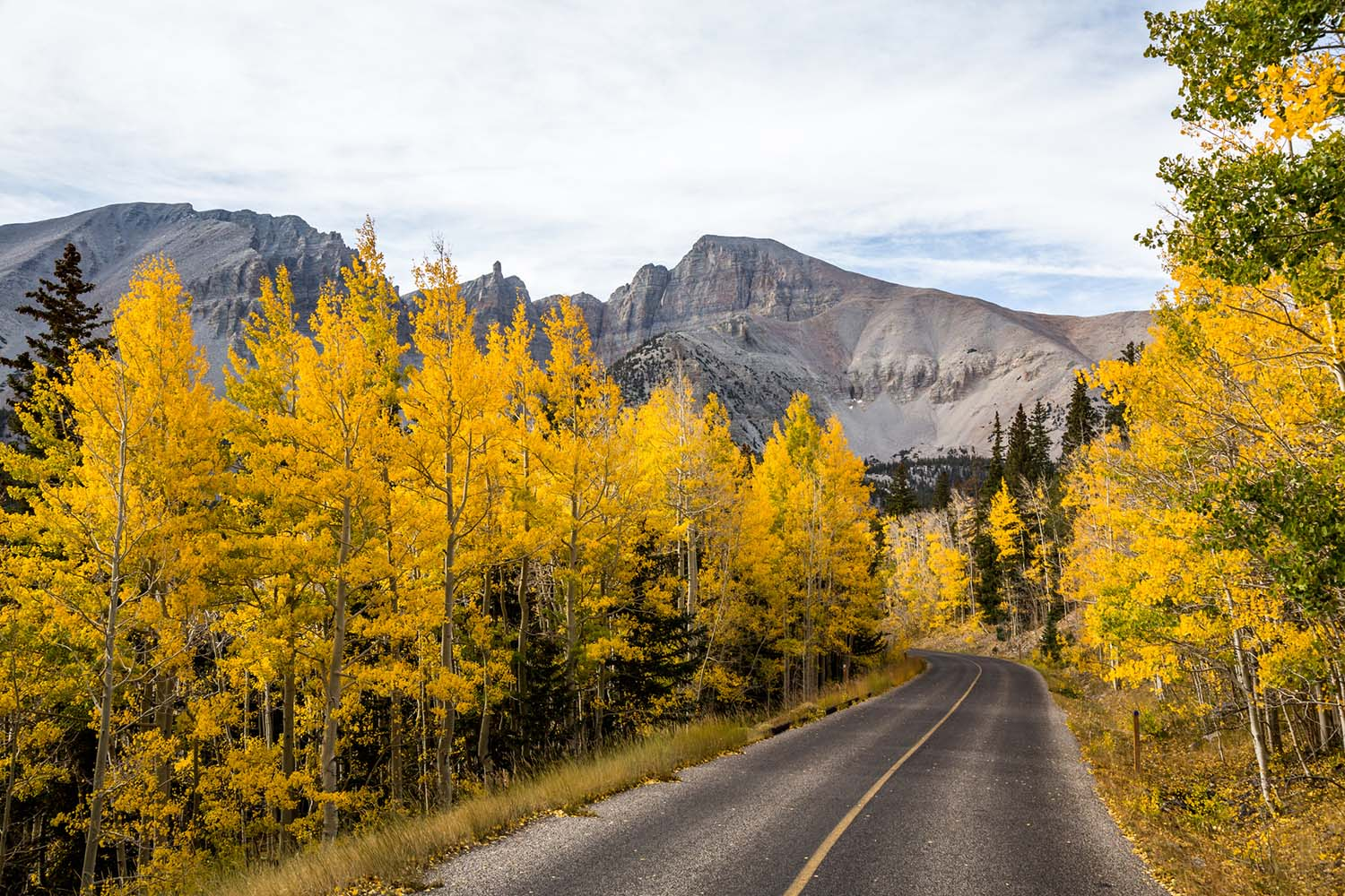 A road flanked by golden aspen trees.
