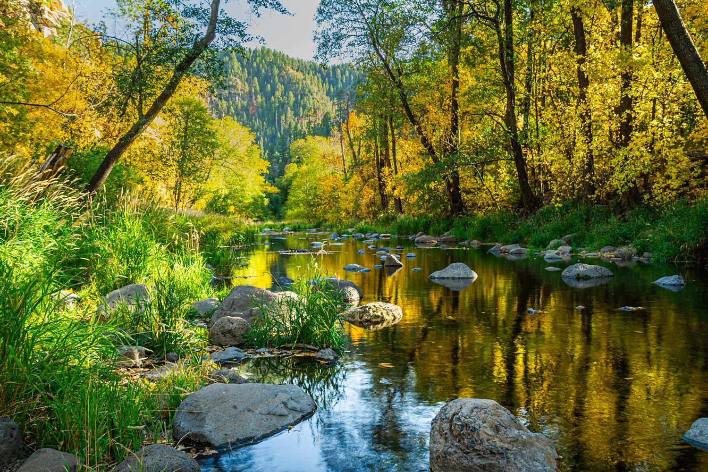 Sunlight beams through a forest over a creek.