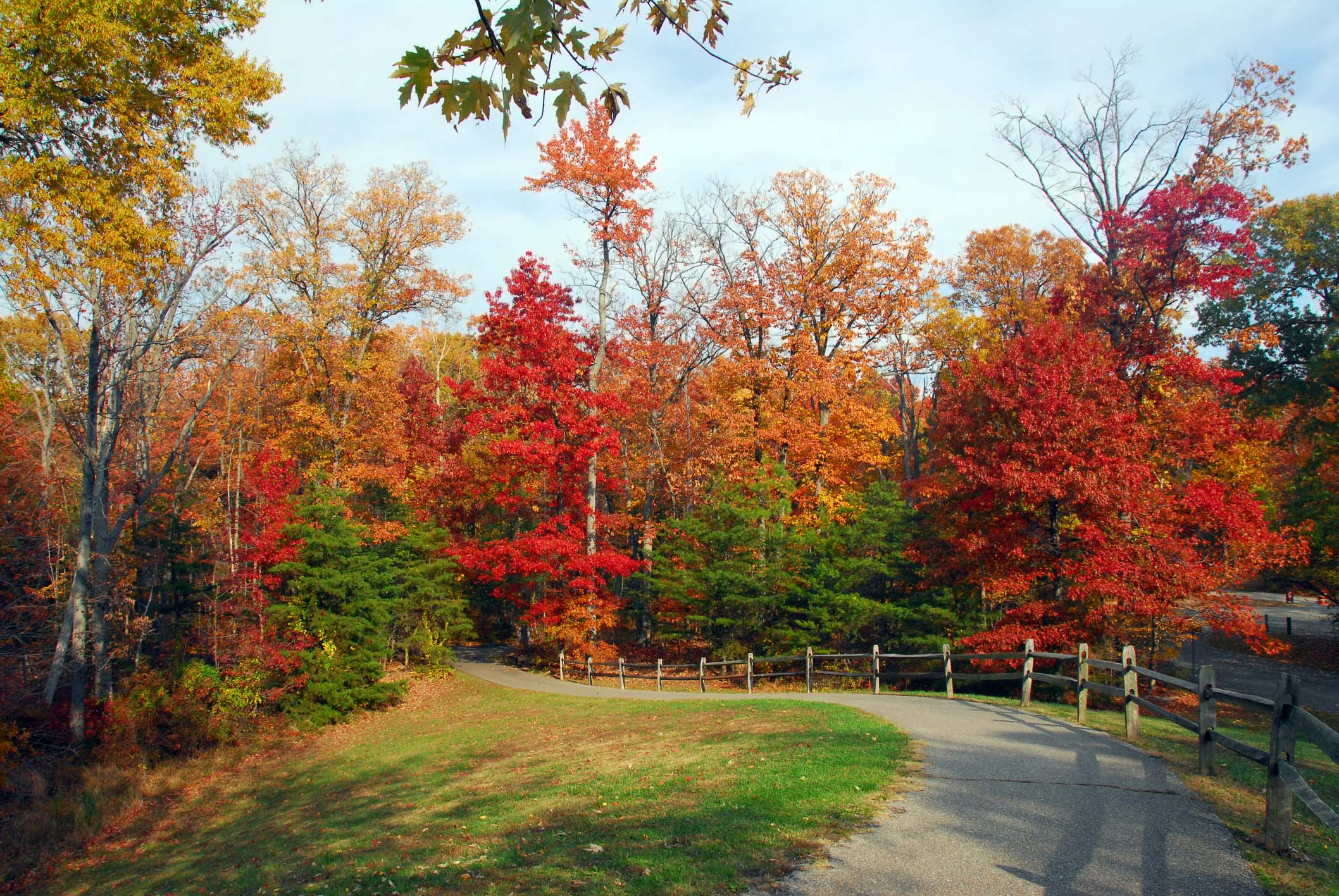 A paved trail flanked with crimson and gold trees during fall.