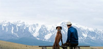 Safeguarding Your Pet — A guy with a dog sits on a bench and admires the mountain scenery. Traveling with a dog. Rhodesian Ridgeback travels with its owner.
