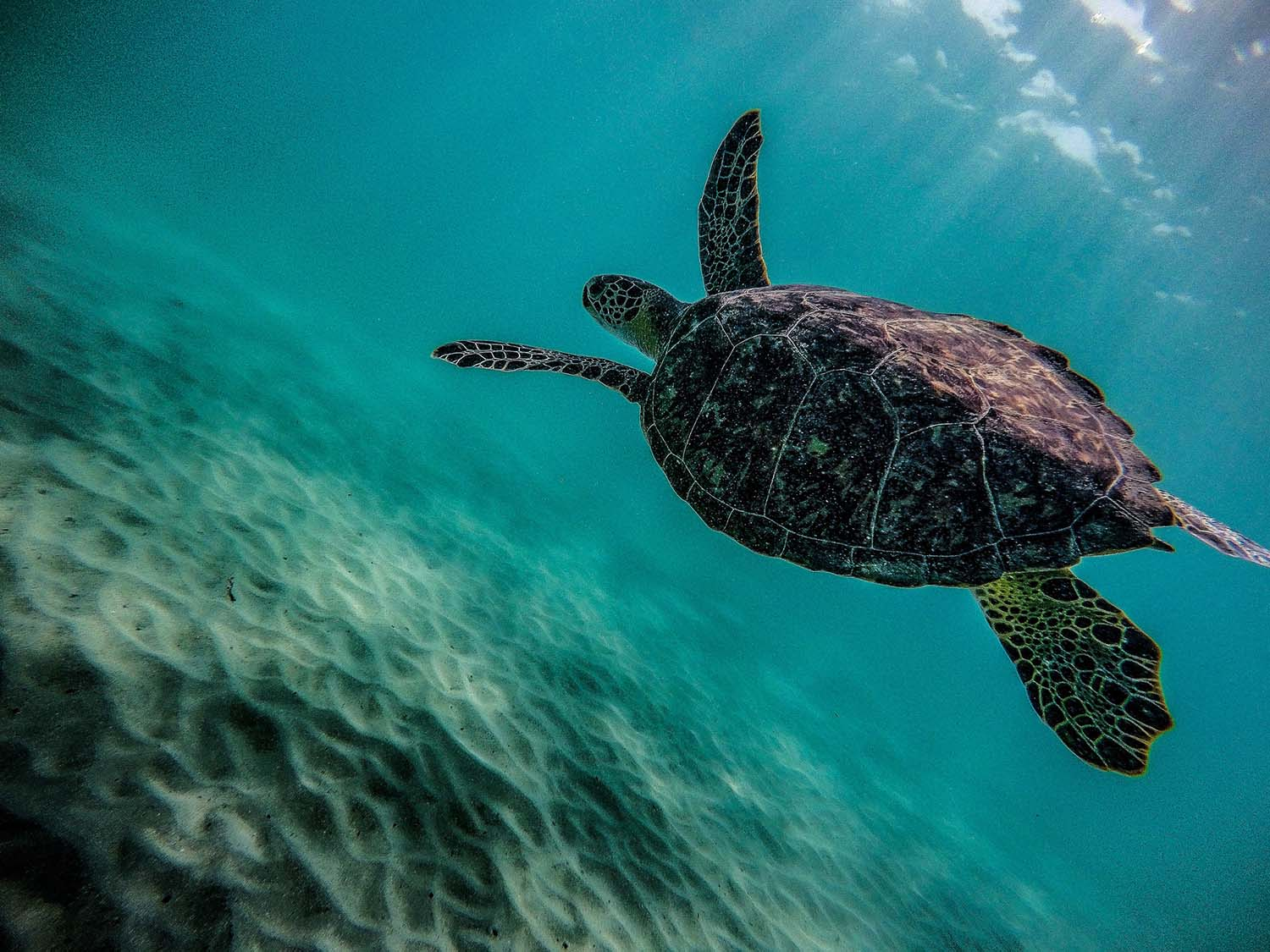 Sea turtle swimming amid rays of sun that stream through the water.